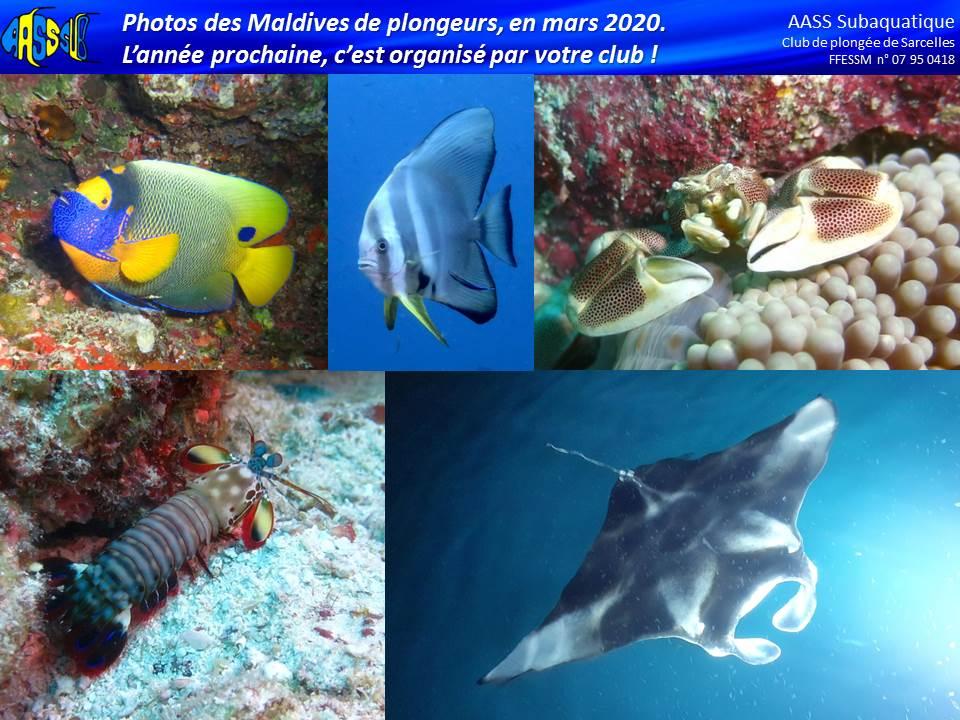 http://www.aass-sub.fr/images/Alex%202019%202020/2020%2004%20-%20Maldives%201.jpg